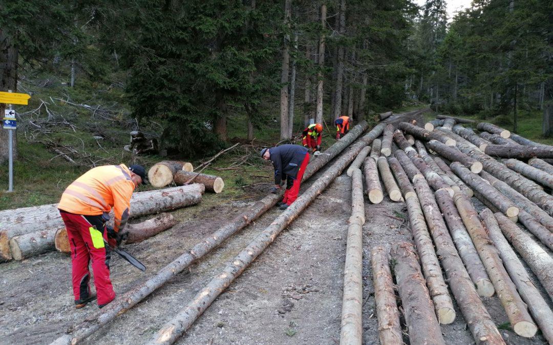 Holzen die Zweite